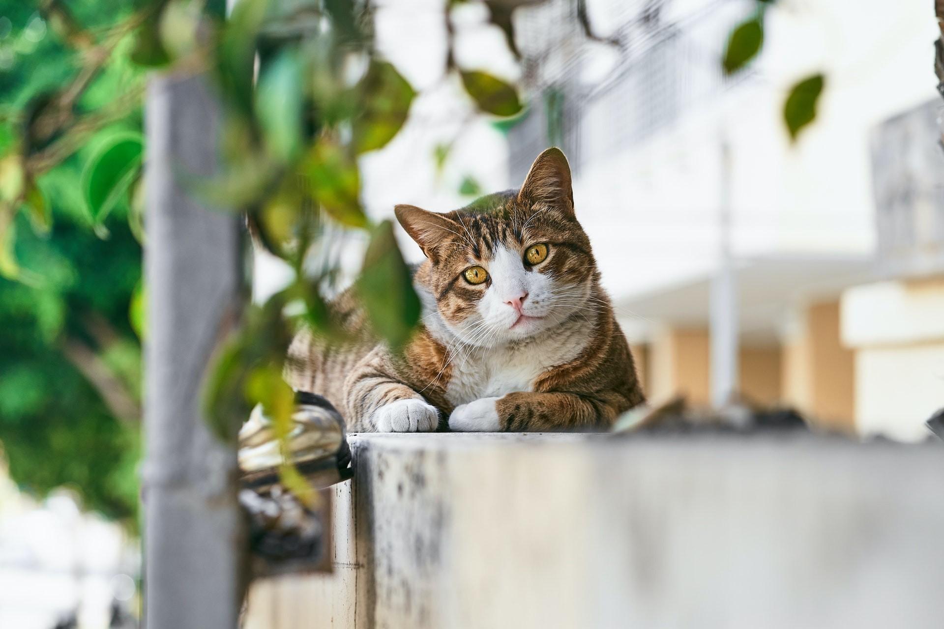 4/10: Παγκόσμια Ημέρα των Ζώων. Υιοθέτησε ένα αδέσποτο, μπορείς!
