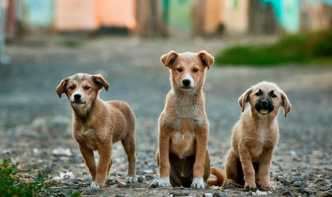 Καταφύγιο ζώων η «Αγάπη»: Πάμε μια βόλτα;