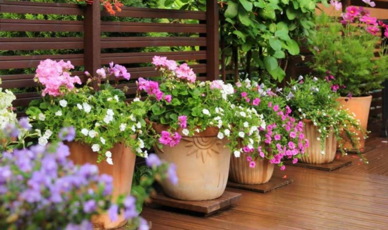 Πως να προστατέψουμε τα φυτά μας από τη ζέστη!
