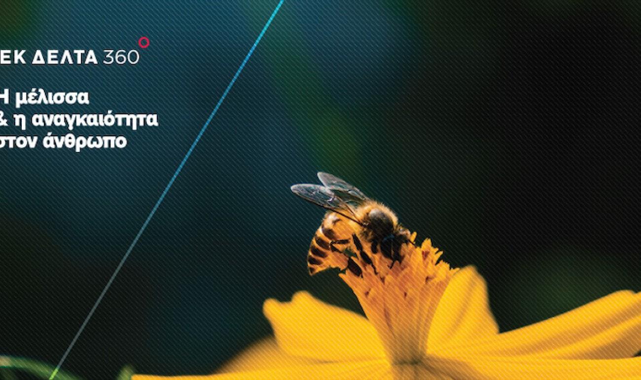 Η μέλισσα & η αναγκαιότητα στον άνθρωπο / ΙΕΚ ΔΕΛΤΑ 360 Ιωαννίνων